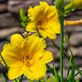 Pretty Yellow by Tammy Bryant
