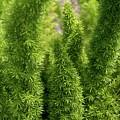 Prickly Green Shrub by Michele Stoehr