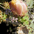 Prickly Pear Flower 4 by Kelley King