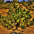 Prickly Pear In Bloom With Brittlebush And Cholla For Company by Roger Passman