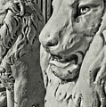 Pride Of Lions by JAMART Photography