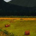 Priest Lake Hay Bales by David Patterson