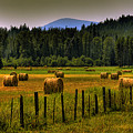 Priest Lake Hay Bales II by David Patterson