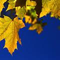 Primary Autumn by David Andersen