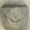 Primate by Movie Poster Prints