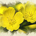 Primrose Flowers Blank Note Card by Christina Rollo