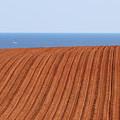 Prince Edward Island Fields 5645 by Jack Schultz