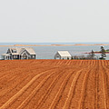 Prince Edward Island Fields 5668 by Jack Schultz