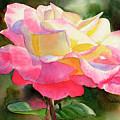 Princess Diana Rose by Sharon Freeman