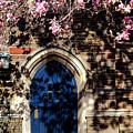 Princeton University Door And Magnolia by Olivier Le Queinec