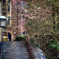 Princeton University Old Stairway by Olivier Le Queinec