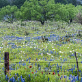 Private Property -wildflowers Of Texas. by Usha Peddamatham