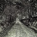 Private Road B by John Myers