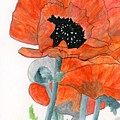 Prize Poppies by Alexis Grone