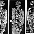 Processes Of Mummification by Wellcome Images