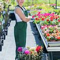 Professional Gardener At Work In A Nursery. by Michal Bednarek