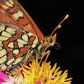Profile Of A Butterfly by Mimi Ditchie