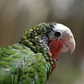 Profile Of A Conure Parrot Up Close by DejaVu Designs