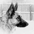 Profile Of A German Shepherd by Angie Tirado