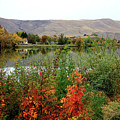 Prosser Autumn River With Hills by Carol Groenen