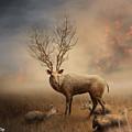 Deer Warm Tone by Somchai Chitprathak