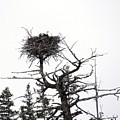 Protecting The Nest by Mary Haber
