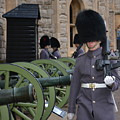 Protecting The Tower Of London by Diane Berard