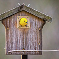 Prothonotary Warbler House by Emma England