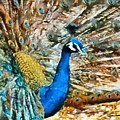 Proud As A Peacock by Charmaine Zoe
