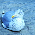 Proud Bird by Expressionistart studio Priscilla Batzell