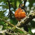 Proud Bird by Mark Lemon