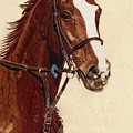 Proud - Portrait Of A Thoroughbred Horse by Patricia Barmatz