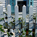 Provincetown Fence #1 by Susan Vineyard