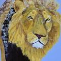 Prowling Lion by Donald J Ryker III