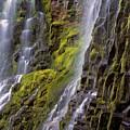 Proxy Falls by Leland D Howard