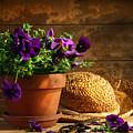 Pruning Purple Pansies by Sandra Cunningham