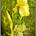 Psalm 13 5 by Michelle Greene Wheeler