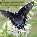 Psalm Scripture - Swallowtail by Cindy Treger