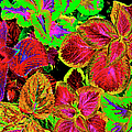 Psychedelic Coleus - 38 by Paul W Faust - Impressions of Light