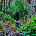 Psychedelic Fern Gully On Mt Tamalpais by Ben Upham III