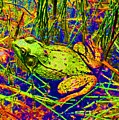 Psychedelic Frog  by David Frederick