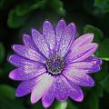 Psychedelic Purple Petals  by Ryan Fox