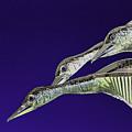 Psychedelic Sculpture Of Three Mallard Ducks Flying by Peter Lloyd