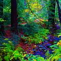 Psychedelicosmic Creek On Mt Tamalpais by Ben Upham III