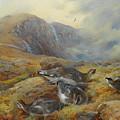 Ptarmigan Danger Aloft By Thorburn by Archibald Thorburn