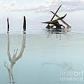 Pteranodon Pterosaur Diving Underwater by Arthur Dorety