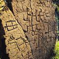 Puako Petroglyphs by Mary Van de Ven - Printscapes