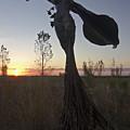 Public Art At Sun Rise by Sven Brogren