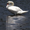 Puddle Duck by John Feiser
