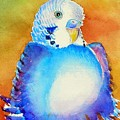 Pudgy Budgie by Patricia Piffath
